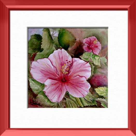 A rose hibiscus, Madras - India, Plants, flowers, nature - , original framed watercolour, world travel diary, world watercolour