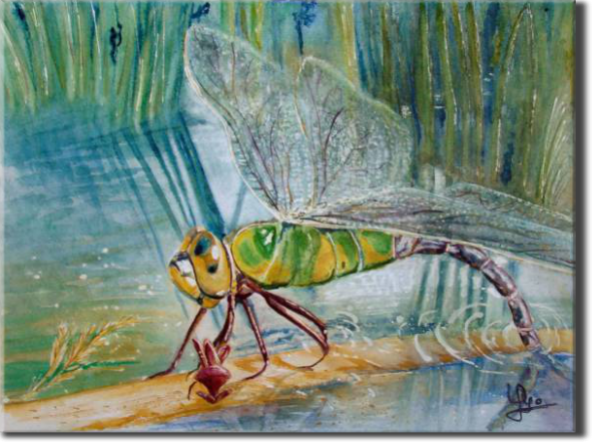 Dragonfly - Anax imerator, From a Quentin's photo., Insects - , original framed watercolour, world travel diary, world watercolour