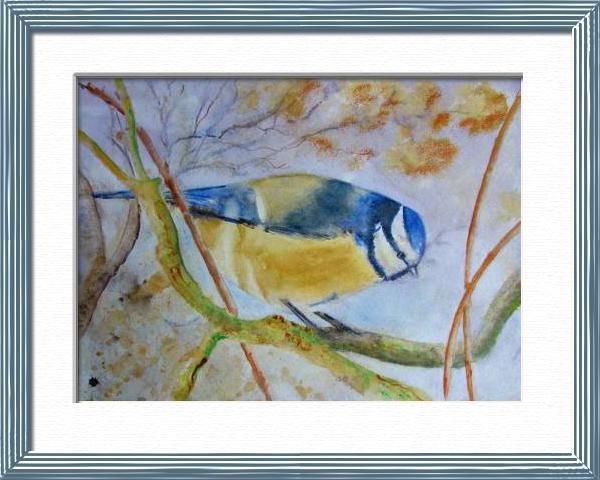 Blue titmouse, From a Quentin's photo, Birds - , original framed watercolour, world travel diary, world watercolour