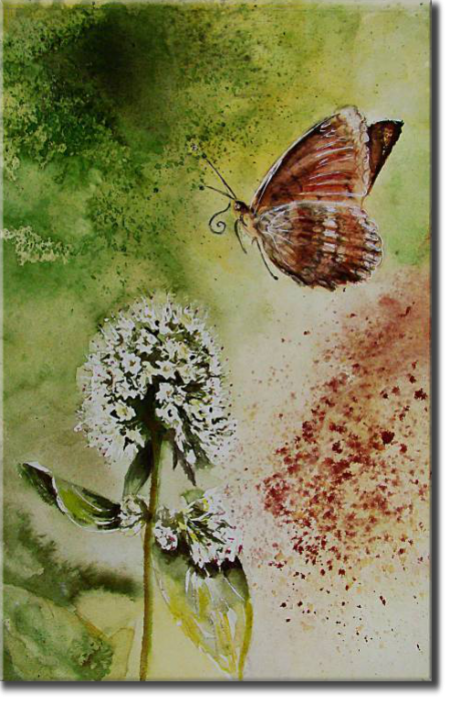 Butterfly, Mélitée des centaurées, Plants, flowers, nature - Insects - , original framed watercolour, world travel diary, world watercolour